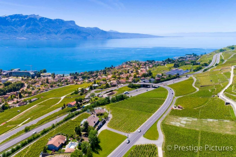 Grapevines on the banks of Lake Geneva by Prestige Pictures
